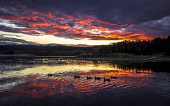 Sunset (Paul Rioux) Tags: esquimalt lagoon sunset evening calm water reflections birds ducks clouds ripples canon7dmkii trees prioux