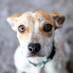 Lighting15Sep201815.jpg (fredstrobel) Tags: dogs pawsatanta atlanta usa animals ga pets places pawsdogs decatur georgia unitedstates us