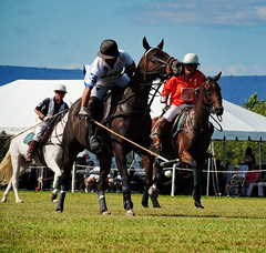 9971 (A. Georgis) Tags: polo ponies horses