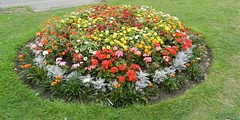 Beautiful Flowers, Worcester, Sep 2018 (allanmaciver) Tags: colours bright worcester england flowers show delight enjoy admire allanmaciver