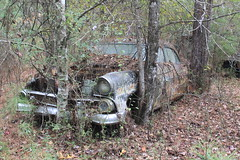 More Relics & Refugees (BennyPix) Tags: junkyard rust old classic vintage antique retro barkada wilmar ar drewcounty arkansas november 2015 © allrightsreserved unauthorizedusestrictlyprohibited allcommercialuseprohibited junk car auto automobile bennypix canon eos 50d 1955 ford forsale liquidation