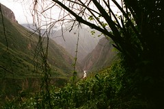 Farm Land (IggyRox) Tags: peru andes mountains southamerica choquequiraomachupicchutrek abancayprovince apurimacregion film 35mm hike trek nature beauty vilcabamba santateresadistrict laconvencionprovince cuscoregion farm mountainside rioblanco river green view above atmosphere valley high color huanipacadistrict
