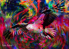 Fly (brillianthues) Tags: bird motion colorful collage photography photmanuplation photoshop
