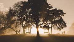 Hampstead Heath Park (millerartwork) Tags: mu9a0960lnd1 hampstead heath sunset park london north