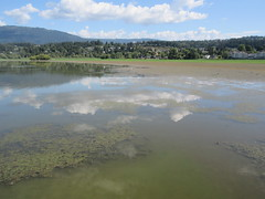 Nature Bay (jamica1) Tags: salmon arm shuswap bc british columbia canada clouds reflection