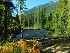 Rock Islabd Campground (Pictoscribe) Tags: pictoscribe icicle river rock island campground wa chelan county usfs
