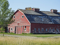 Weathered beauty (annkelliott) Tags: alberta canada eofcalgary farm building structure barn red old weathered field tree sky outdoor summer 6september2018 nikon p900 nikonp900 annkelliott anneelliott ©anneelliott2018 ©allrightsreserved