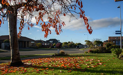 Sun is Setting (Jocey K) Tags: newzealand nikond750 christchurch tree leaves letterbox houses buildings architecture lawn sky clouds