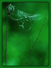 Home on the green (Creative Bling) Tags: home green web spider spiderweb londonontario darrellcolby