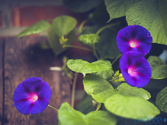 Hello Beautiful (Brian D' Rozario) Tags: brian19869 briandrozario nikond750 d750 50mm flower floral nature natural flora plantkingdom shallowdepthoffield shallowdof dof depthoffield greenery summertime summer