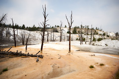 Yellowstone #3 (richardtostain) Tags: landscape trees dead volcanic arbres mort paysage desolation pentax 31mm f18 limited sony a7ii