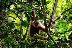 Mind Your Own Business (Neilvert Noval) Tags: monkey cebu cebusugbo tree plants green climb