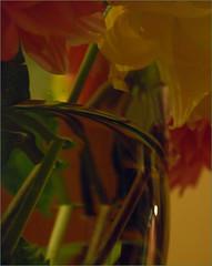 DSC_4764 (FMAG) Tags: macro glass macromondays