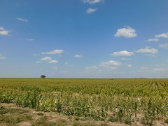 Wichita County Sorghum Field (jimmywayne) Tags: selkirk wichitacounty kansas field harvest landscape sorghum