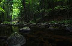 Märchenwald - enchanted forest (huetteberg) Tags: deutschland nationalpark harz landschaft ilsetal fluss wasser wald sachsenanhalt