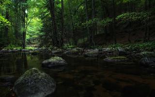 Märchenwald - enchanted forest