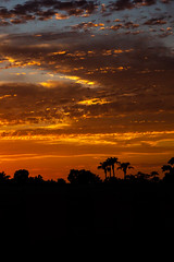 Orange Drift (O.S. Fisher) Tags: arizona broken clouds landscape layered palms silhouette sky sunrise sunset trees