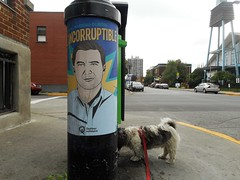 Something Smells (navejo) Tags: montreal quebec canada election poster dog gizmo lamppost street church