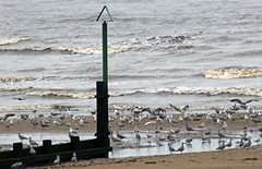 Waters edge (Gill Stafford) Tags: gillstafford gillys image photograph wales northwales denbighshire rhyl sea river estuary harbour beach gulls birds seagulls