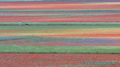 walking in the colorful meadows (edoardo.gobattoni) Tags: landscape lines colorful meadows blooming