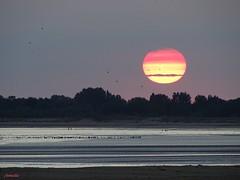 Le soleil couchant est un artiste de génie . (Armelle85) Tags: extérieur nature paysage sunset crépuscule coucher de soleil mer océan eau arbre silhouette ombre