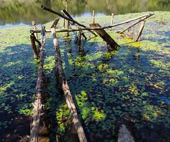 Dock ruins - 2 (MarksPhotoTravels) Tags: bluewallpreserve greenvillecounty southcarolina