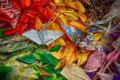 Colourful Cranes (flashfix) Tags: august262018 2018inphotos ottawa ontario canada nikond7100 40mm nikon flashfix flashfixphotography origami cranes colourful paper crafts artsandcrafts creative fun patterns macro 2minutemacro