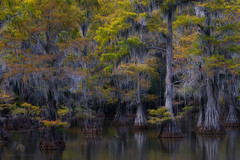 Cajun Scene (jojo (imagesofdream)) Tags: southern bayou swamp fall colors