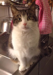 Benny (totheforest) Tags: apple iphone luleå norrbotten sweden cat katt rip