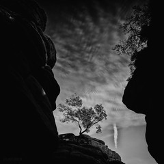 Brimham II (-- Q --) Tags: nationaltrust northyorkshire summerbridge brimhamrocks lonelytree sky clouds leefilters marumidhgcpl monochrome blackandwhite qthompson landscape