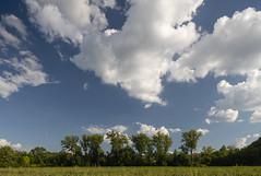 Soybean Field (Notley Hawkins) Tags: httpwwwnotleyhawkinscom notleyhawkinsphotography notley notleyhawkins 10thavenue 2018 summer bottomland riverbottoms missouririverbottoms boonecountymissouri bocomo missouri september sky clouds cloudysky land farmland bucolic rural canontse24mmf35lii landscape trees horizon field farmfield soybean soybeanfield
