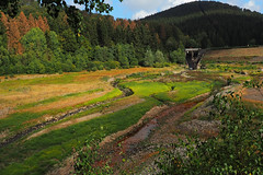 Kein See (michaelmueller410) Tags: reservoir lake söstalsperre dam damm vorsperre wald wiese meadow gras grass creek bach flus stream river forest harz söse germany drought green fall autumn climate change
