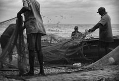 Flicking the nets (Buck777) Tags: xh1 anchovies team acros fuji srilanka negombo beach nets fishermen fishmarket