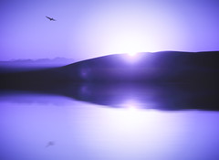 Purple (wagnerchristian.com) Tags: purple art fineart desert landscape reflection bird contrast