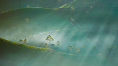 Morning Rays in Tea field (bady_qb) Tags: bandung pangalengan a7ii sony sonyalpha landscape wallpaper morning sunshine sunrise sunray tree nature green 85mm