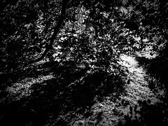 rnor80853.jpg (Robert Norbury) Tags: fuckit somearelandscapessomearenot icantbearsedkeywording fineartphotography blackandwhite photographer itdoesntmatterwhattheyarepicturesoftheyarejustpictures itdoesntmatterwhattheyarepicturesoftheyarejustpictur