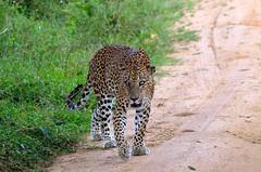 Deesha Safari Tours (niceholidayphotos) Tags: