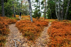 P7295278-Edit.jpg (marius.vochin) Tags: googlevision labels rano scandinavia sweden archipelago autumn biome deciduous ecosystem forest grass hiking leaf nature naturereserve outdoor path soil temperatebroadleafandmixedforest tree vegetation woodland