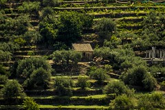 On the slopes of Etna1 (photoautomotive) Tags: sicily italy europe etna volcano slopes steps terraces green hut growing mountetna building