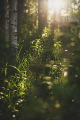 Midsummer18-1 (junestarrr) Tags: summer finland lapland lappi visitlapland visitfinland finnishsummer midsummer yötönyö nightlessnight kemijoki river