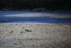 IMG_1200 (2) (www.ilkkajukarainen.fi) Tags: alakögäs teno tana river finland norway joki suomi finlande happy life lapland lappi same nuorgam arcticcircle napapiiri fishing sport lust fiske fiskare urheilu kalastus angling särkkä atlanticsalmon atlannilohi lax salmon