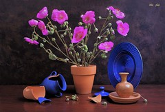 Garden's Losses (Esther Spektor - Thanks for 12+millions views..) Tags: stilllife naturemorte bodegon naturezamorta stilleben naturamorta composition creativephotography tabletop plant pot plate jar lid broken fragment ceramics pottery glass bud ambientlight green magenta orange rust fuschia blue cobalt brown estherspektor canon