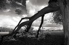 Rateau (Atreides59) Tags: france nord baisieux ciel sky nuages clouds nuage clous arbre tree nature fields champs pentax k30 k 30 pentaxart atreides atreides59 cedriclafrance black white bw blackandwhite noir blanc nb noiretblanc