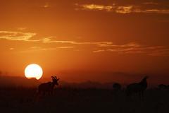 _KEN3838_DxO (Emmanuel Bonnetot) Tags: kenya 2018 masai mara