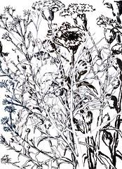flowerdrawing flowerdrawings flowerart flowerartist flowerartists flowerpainter flowerpainters raphael perez (raphaelperez806) Tags: flowersdrawing flowersdrawings flowersart flowersartist flowersartists flowerspainter flowerspainters raphael perez raphaelperez flowerdrawing flowerdrawings flowerart flowerartist flowerartists flowerpainter flowerpainters flowerpainting flowerpaintings flowerspaintings flowerspainting flowersartworks flowersartwork flowerartwork flowerartworks howtodrawflower drawflower drawflowers howdrawflower howdrawflowers drawingflower drawingsflowers drawing draw howtopaintaflower howtopaintaflowers paintaflower paintaflowers paintflower paintflowers paintingsofflower paintingofflower paintingflower paintingsflowers israeliartist israelidraw israelidrawer רישוםשלפרח רישוםפרחים רישומיפרחים רישומיפרח רפיפרץ רישום של פרח flower flowers drawings paintings art artists artist painter painters artwork artworks רפי פרץ