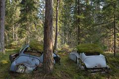 Waldorf & Statler (mariburg) Tags: rotten marode forgotten ruin decay desolate derelict cars rustycars auto canoneos6d canonef1635mmf4lisusm saab peugeot