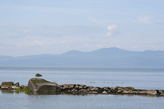 Across the St Lawrence (Brad_McKay) Tags: ifttt 500px horizon over water riverbank coastline beach idyllic coastal feature lake waters edge seascape river canada st lawrence quebec landscape nature peaceful quiet mountain hazy beautiful