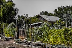 At the Farm! (Kerstin Winters Photography) Tags: photography fotografie nikondsl nikondigital flickr flickrnature outdoor heritagefarm albuquerque newmexico
