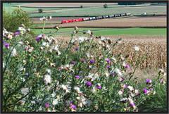"Fading Summer ("" Wiener Schule "") Tags: öbb oebb obb 2016 eisenbahn railway railroad statzendorf güterzug freight train austria"