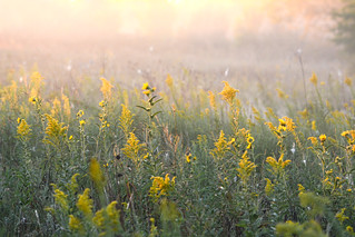 Morning Meadow